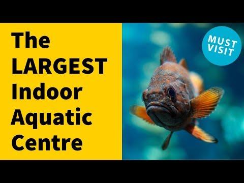 The LARGEST Indoor Fish Aquatics Pet Store Tour - Must See