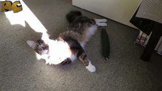 Коты бояться огурцов