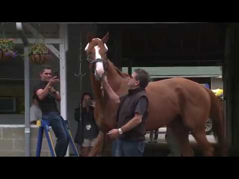 Justify at Louisville's Churchill Downs after Triple Crown win