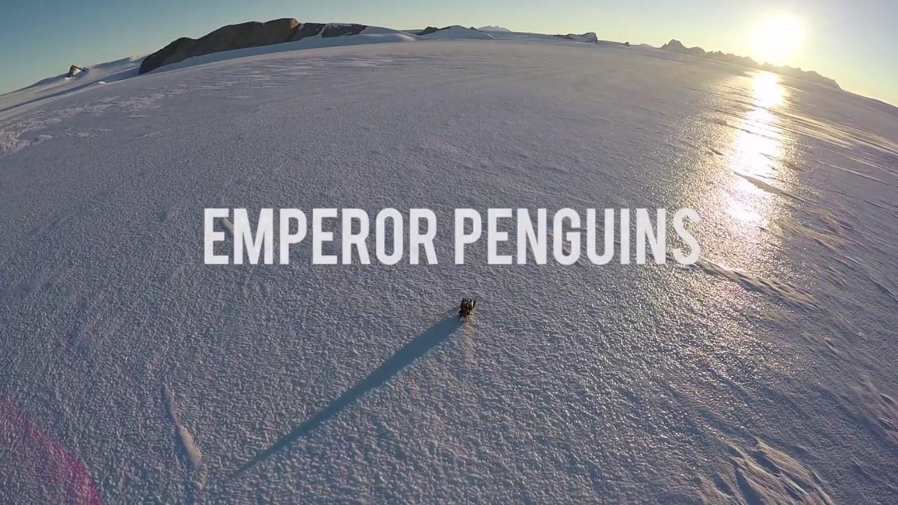コウテイペンギンの営巣地(ホワイトデザート社)