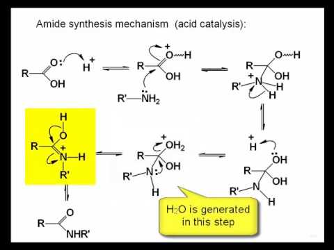 amide and williamson ether synthesis of acetophenetidin Synthesis of mdma essays:  synthesis of acetophenetidin  williamson ether synthesis and amide synthesis.