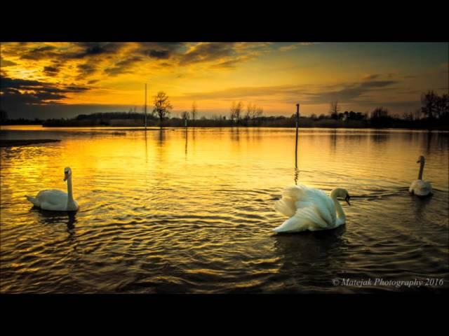 albatross-fleetwood-mac-silvestar-matejak