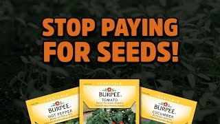 Find FREE Seeds in Your Kitchen! - HNB #6