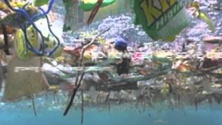 The Pacific Gyre Garbage Patch