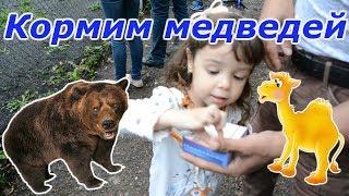 Медведи дерутся за сахар   Кормим животных в парке. 🐻🐫
