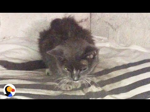 Cat Abandoned in Basement for 20 Years Is FINALLY Loved | The Dodo