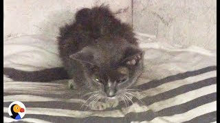 Cat Abandoned in Basement for 20 Years Is FINALLY Loved   The Dodo