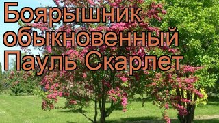видео БОЯРЫШНИК ОБЫКНОВЕННЫЙ
