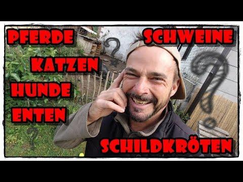 Herzlich Willkommen zurück ... | Pferde Hoschi from YouTube · Duration:  7 minutes 17 seconds