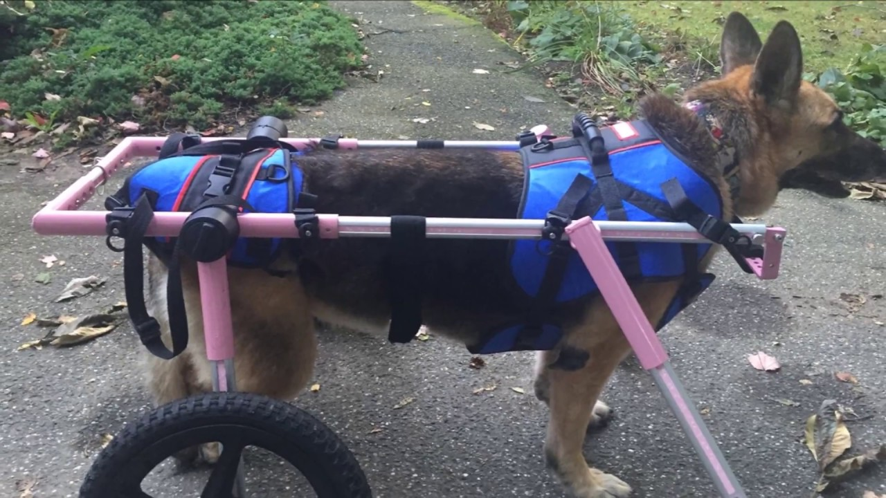 How to Make Front Combo Harness Compatible with Quad Wheelchair