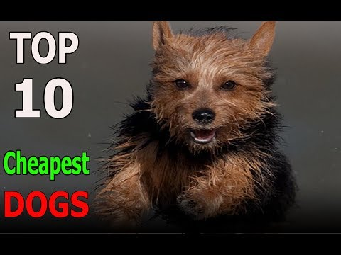 Top 10 Cheapest dog breeds | Top 10 animals