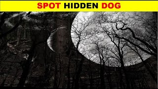Can you find HIDDEN ANIMALS   Nobody can see ALL HIDDEN ANIMALS