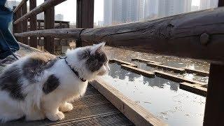 산책하다 오리를 생전 처음 본 노르웨이숲 고양이