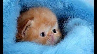 МИЛЫЕ ЖИВОТНЫЕ Люди и животные Смешные коты,собачки.Ella Smile