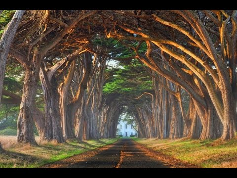 Top 20 most beautiful trees in the world