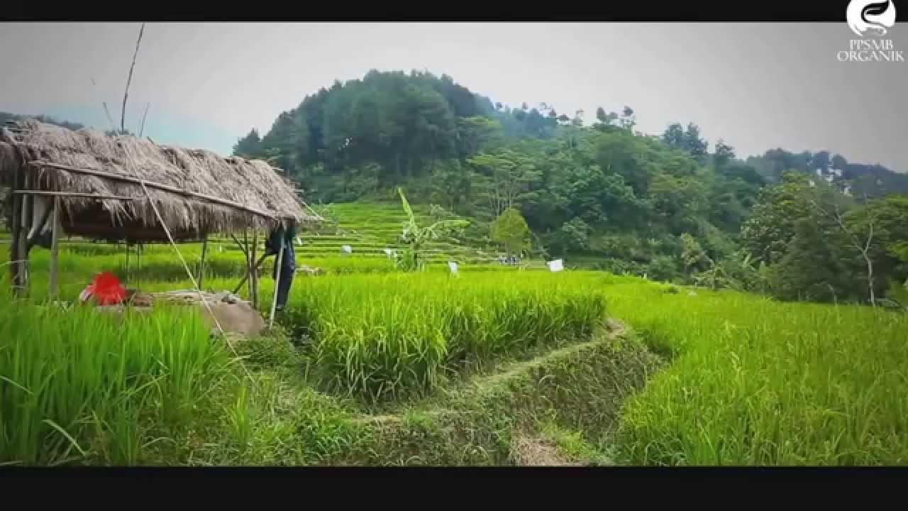 Video Materi Isu Dan Realita Pertanian Perikanan Youtube