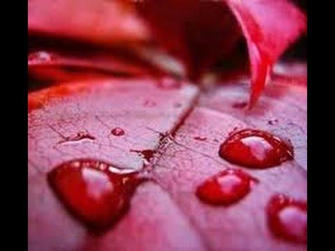 Unknown Secrets from India 8: Red Rain (Kottayam and Idukki, Kerala)