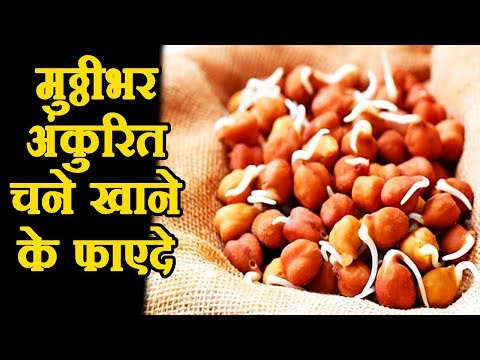 health-benefits-of-sprouted-black-chickpeas-kala-chana
