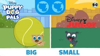 Puppy Dog Pals - Los Opuestos junto a Bingo y Rolly Grande/Pequeño - Disney Junior