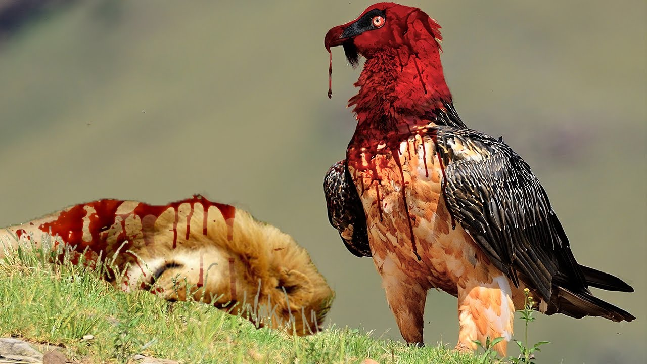 9 Deadliest Birds on the Planet