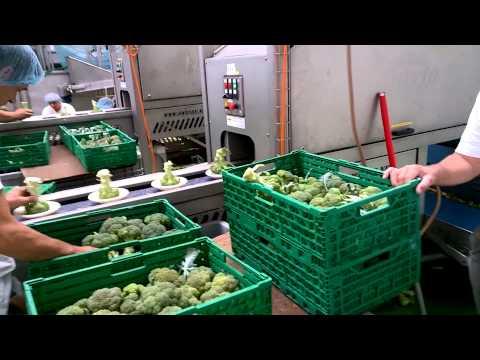 Sweere - Floreto at Bio grower