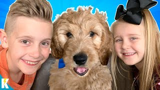Meet our NEW PUPPY! (With a Puppy Gear Test) KIDCITY
