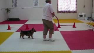 Advanced Trick Dog Title.wmv