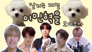 [몬스타엑스_민혁] 인간 말티쥬 이민혁을 모아모아