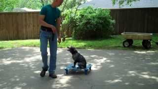 Fort Worth Dog Training | Bo - Mixed Breed Puppy | Redeeming Dogs | Tod Mcvicker, Dog Trainer