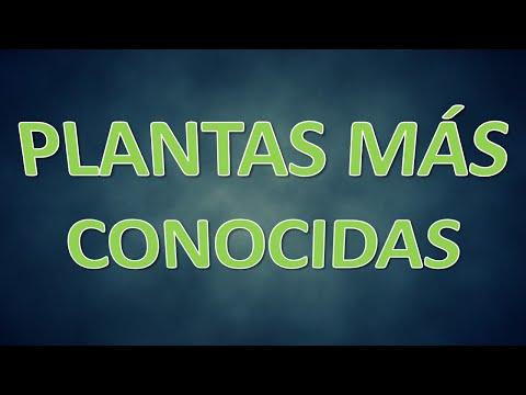 TOP 10 - PLANTAS MÁS CONOCIDAS
