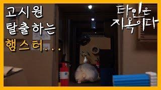 [OCN X SIMI TV] 햄스터 콩이 고시원 탈출 (타인은 지옥이다)