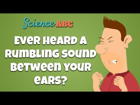 tensor-tympani-muscle:-why-do-you-hear-a-rumbling-sound-when-you-close-your-eyes-too-hard?