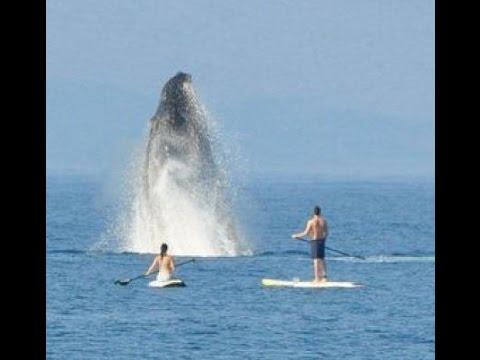 Sfiorati sulla tavola da una Balena/megattera - Hawaii (largo di Maui)