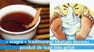 « vi@gr@ » traditionnel tibétain devenu produit de luxe très prisé c0ns3ils