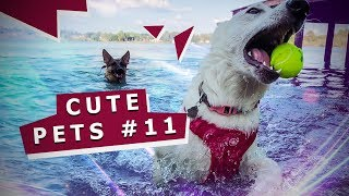Video with cats dogs and others 11 Видео с котами собаками и другими 11