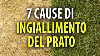 7 Cause di Ingiallimento del Prato