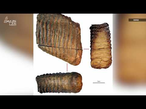 Oldest DNA Ever Sequenced Unearthed From Mammoth That Lived 1.66 Million Year Ago