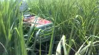 small tractor in sugarcane farm.3gp