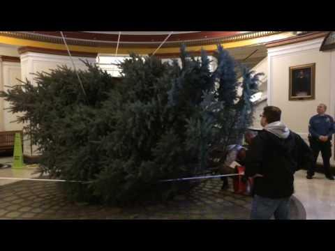 Getting big Xmas tree through narrow Union County Courthouse door