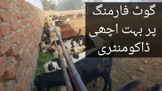 150 goats farm|Goat farming in Pakistan|Goat farming documentary in Urdu|How to start goat farm