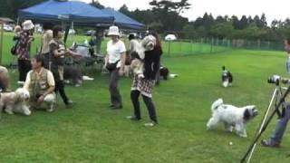 2010.6.5 足柄ドッグランにて オフ会開催。