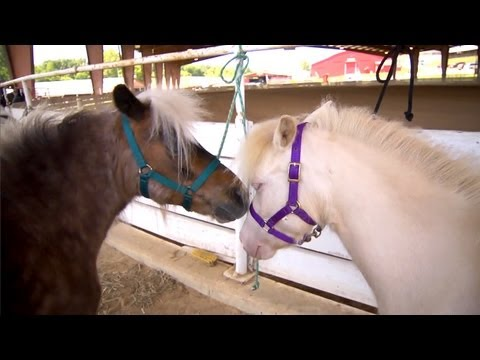 Miniature Horses | Farm Raised With P. Allen Smith