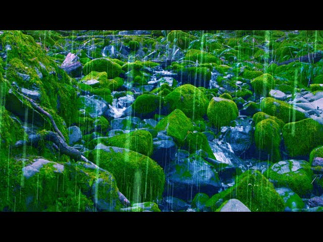 Rain Sounds + Stream for Sleep, Focus, Studying   4K Nature Video White Noise 10 Hours