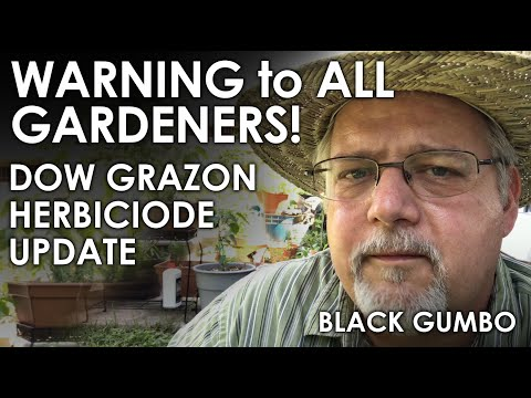 WARNING! Herbicide Danger for Gardeners || Black Gumbo
