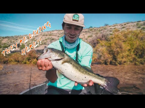 Punching BASS In The NASTIEST Cover!!! Fishing At ALAMO LAKE!!