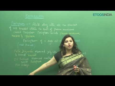 NEET I Biology I Biomolecules I Shivani Bhargava (SB) Mam from ETOOSINDIA.COM
