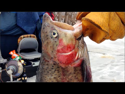Courthouse Lake  - Trout Ice Fishing Opener 2015 - Chaska Minnesota