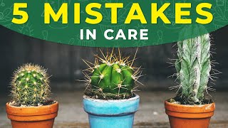 5 COMMON MISTAKES IN CACTUS CARE YouTube Videos