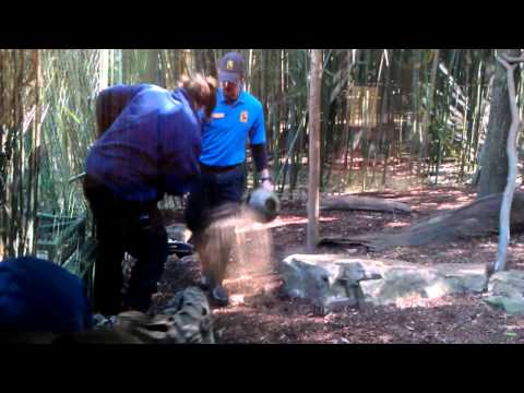 Baby Clouded Leopards Attack The Zookeepers - Part 2