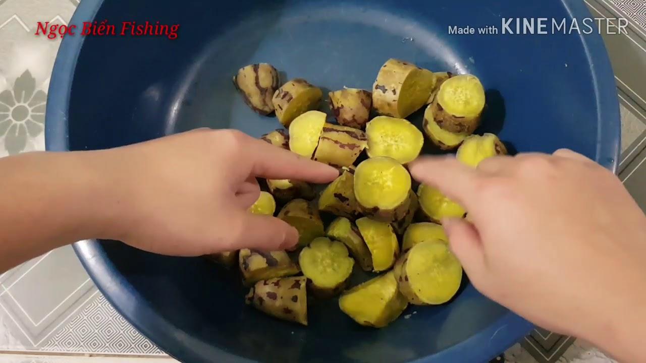 Cách làm mồi câu cá chép, trôi, trắm hiệu quả với khoai lang ủ – ngọc biển fishing